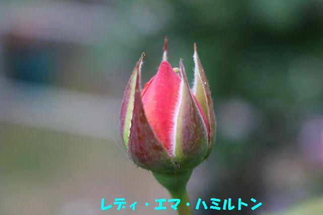 IMG_9130.jpg