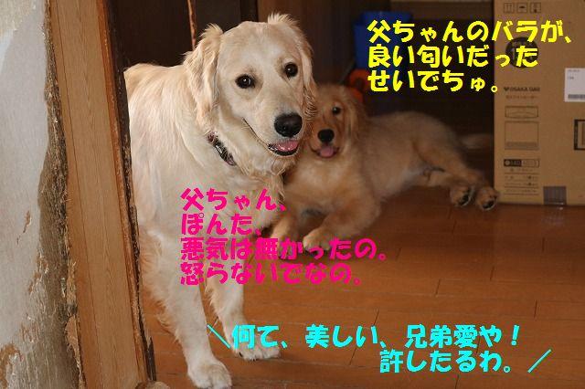 IMG_9149.jpg