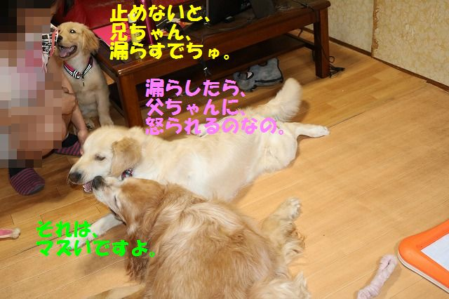 IMG_9312_2017052621174665a.jpg