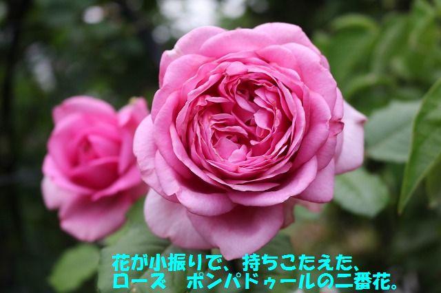 IMG_9543.jpg