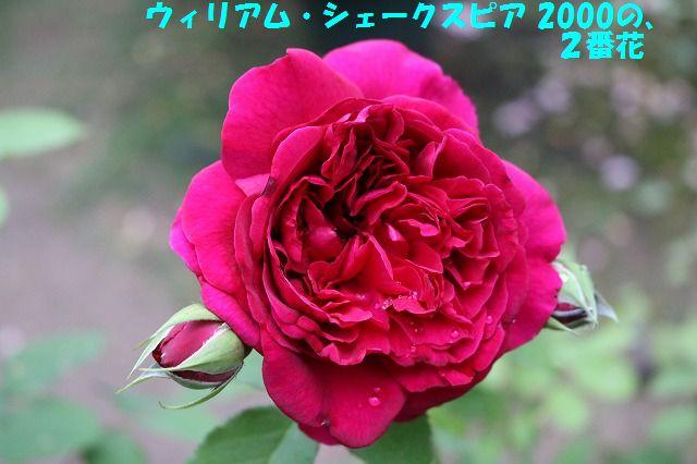 IMG_9548_201706022257492f6.jpg