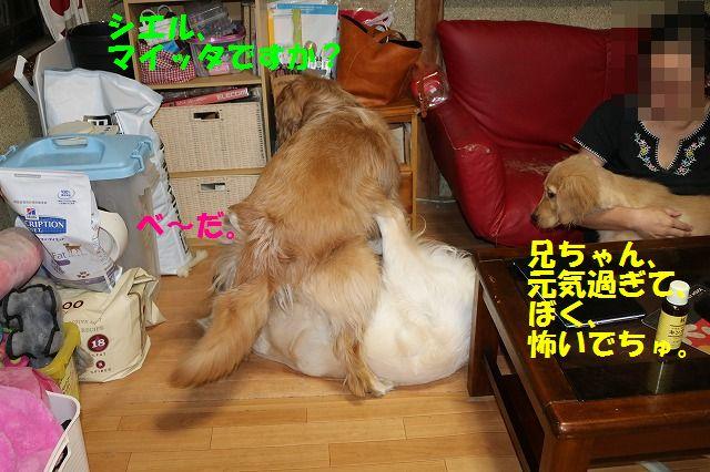 IMG_9565_20170601235832d54.jpg