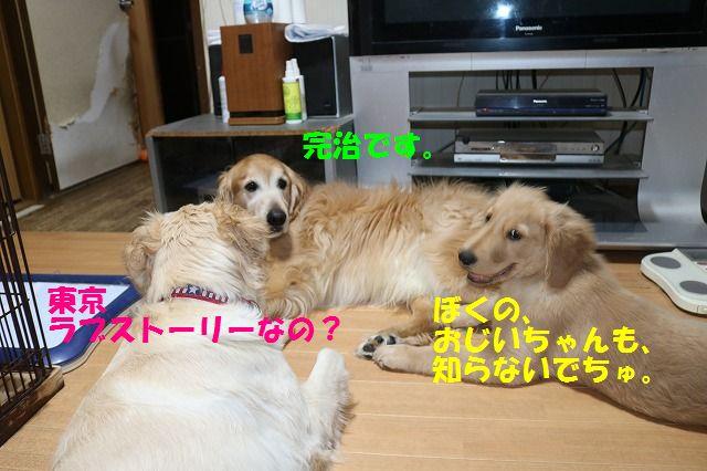 IMG_9612_20170601235838deb.jpg