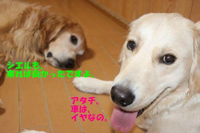 IMG_9694.jpg