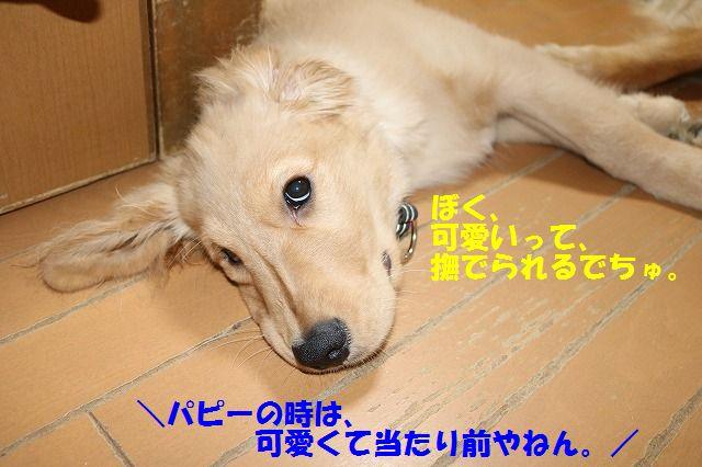IMG_9698_20170603232222e6a.jpg
