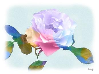 バラの花のシルエット-2-1
