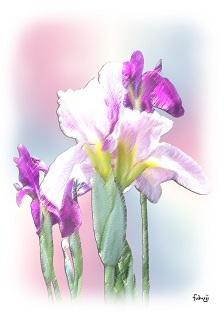 花ショウブのパステル画風-1