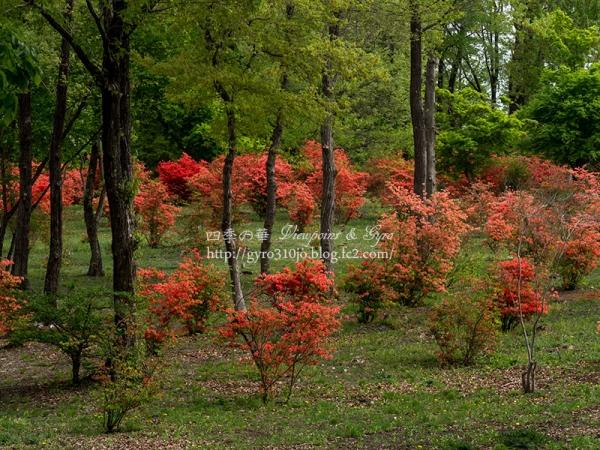 赤城自然園 A