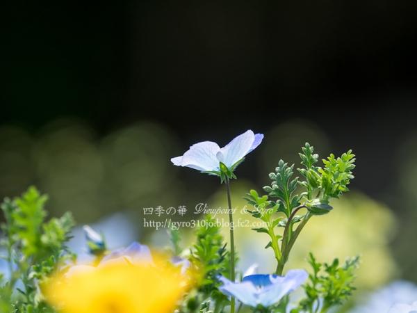 里山ガーデン O