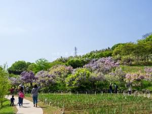 横須賀しょうぶ園 C