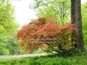 赤城自然園 C