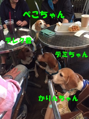 IMG_4224_20170514203558fe2.jpg