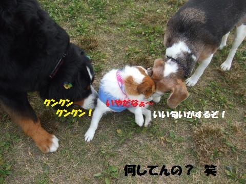 029_convert_20170621151655.jpg