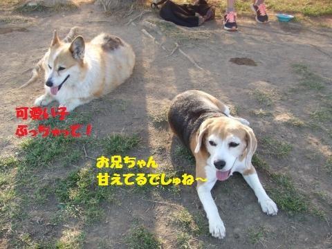 046_convert_20170523113528.jpg