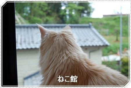 blog2_2017051610263770a.jpg