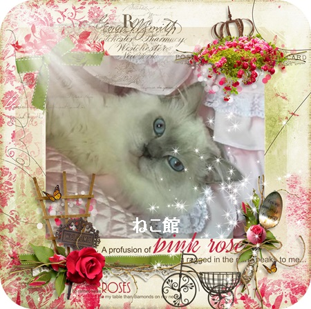 blog3_20170607075439644.jpg