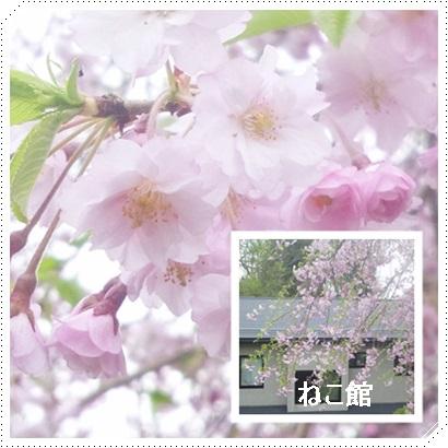 blog4_201705051709500fe.jpg