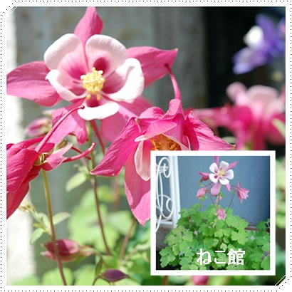 blog4_20170522145116e7e.jpg