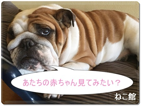 blog6_20170510095457a4c.jpg
