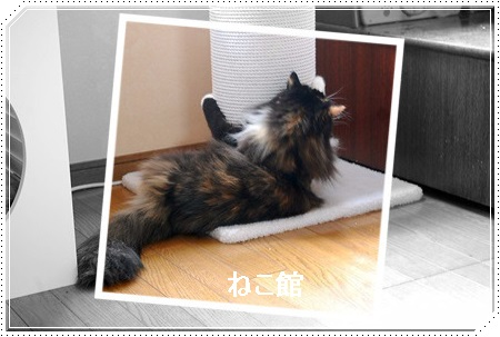 blog6_20170704095624523.jpg