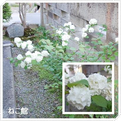 blog7_2017052214513931d.jpg