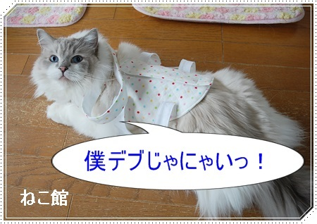 blog8_20170605133122b93.jpg