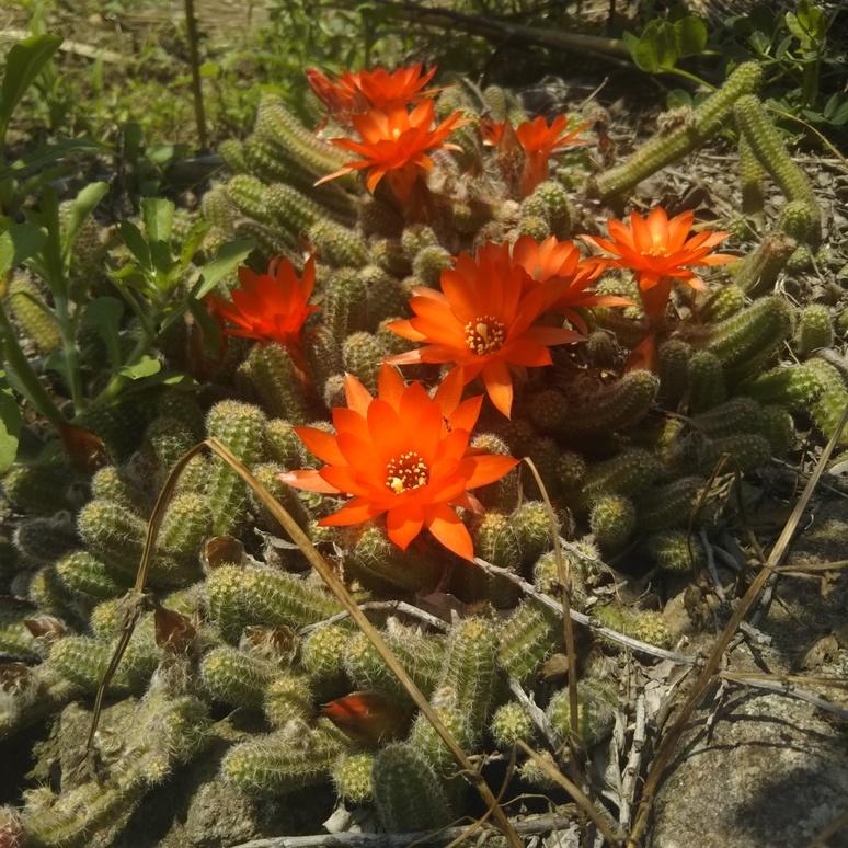 Cactus 20170514