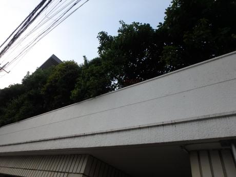 P5301062.jpg