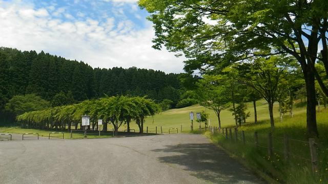 森林公園 20170615-3