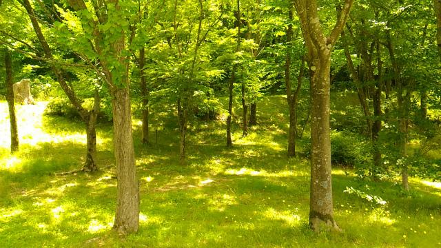 森林公園 20170615-8