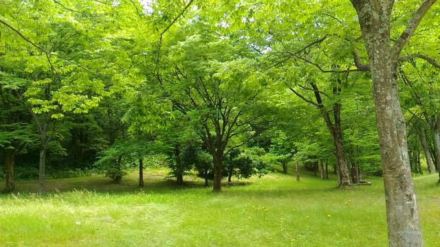 森林公園 20170615-12