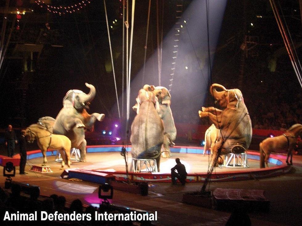 LA_circus_ban1.png