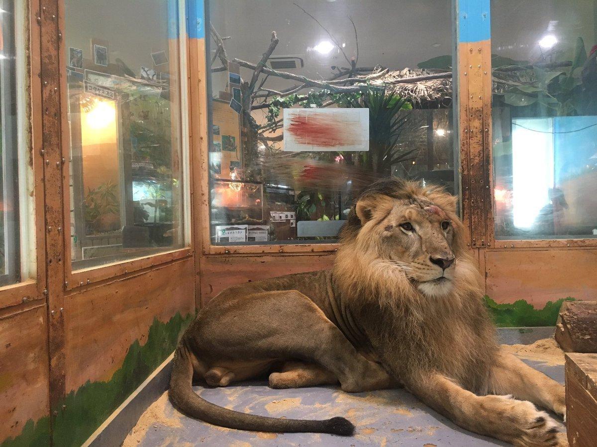 sawareru_lion.jpg