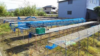 hikkoshi (2)