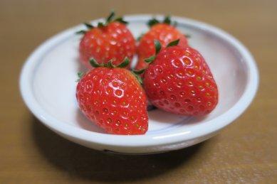 苺・初めての収穫