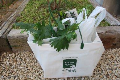 盆栽祭りで購入した植物・袋
