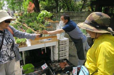 川口bonsai村のご夫婦