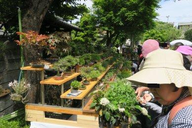 安価なポリ鉢入りもあるが、高級な小品盆栽が得意な川口bonsai村