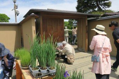 園内では、世界盆栽展のシンボル盆栽・飛龍が展示