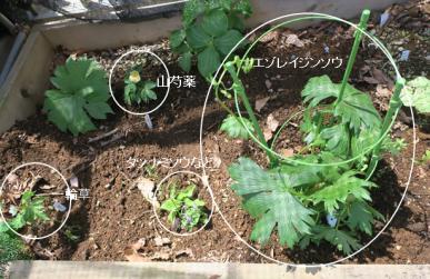 山野草植付け(熊谷草畑)
