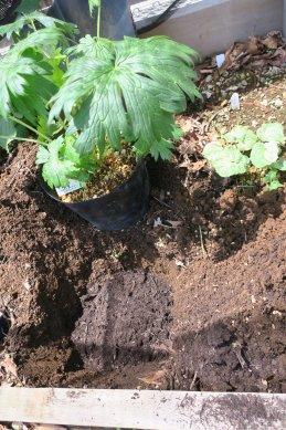 腐葉土を敷く