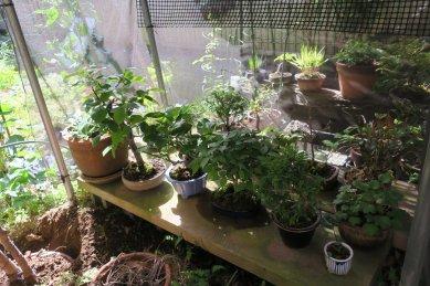 ミニ盆栽棚