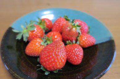 三日目の摘み取り苺