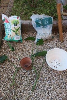 挿し穂と鉢・用土等準備
