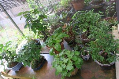 梅雨入りに備え、ミニ棚の苗鉢を一旦除去