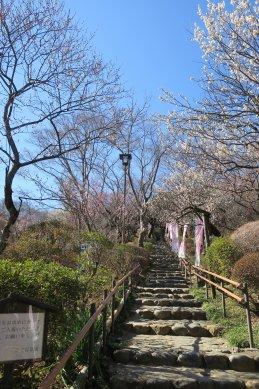 京王百草園(梅祭時期)