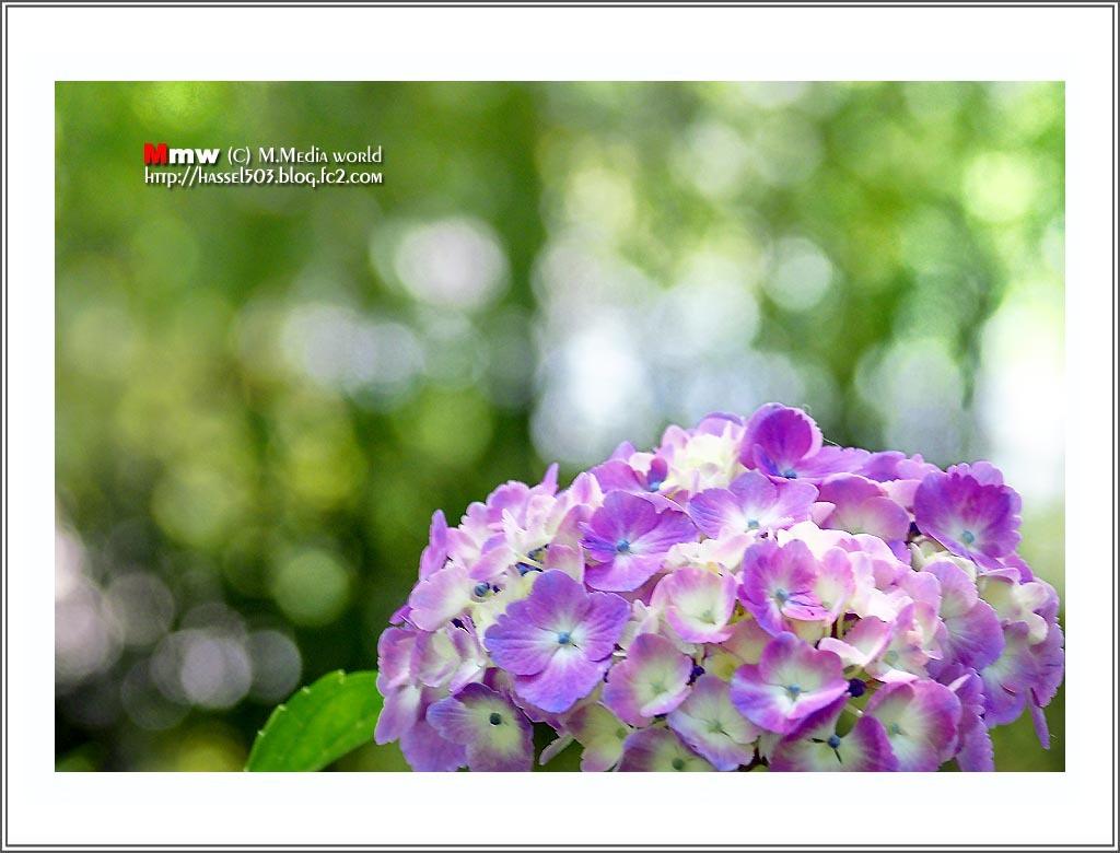 17fc_6_07.jpg