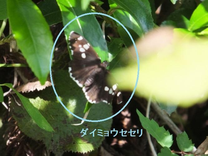 DSCF8436_1.jpg