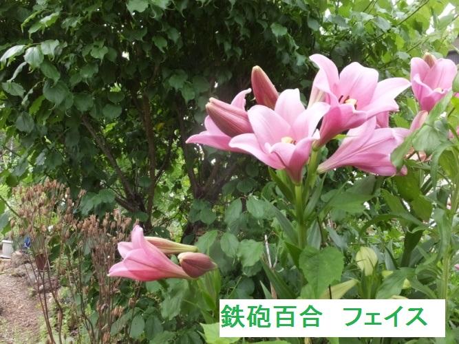 DSCF9684_1.jpg