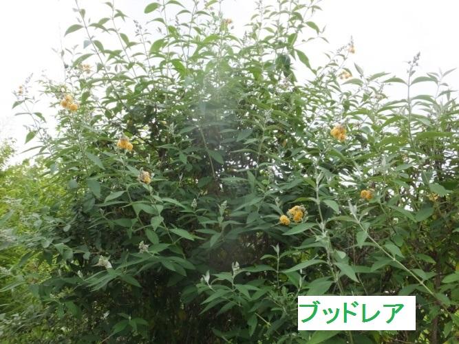DSCF9690_1.jpg
